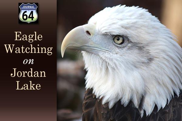 eagle-watching-jordan-lake-2